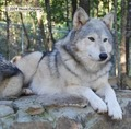 Haven (My Story) - fire-and-ice-the-wolf-pack photo