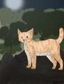 Фото на аву в вк коты воители