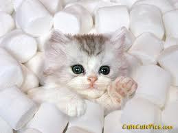 Marshmellow Kitty