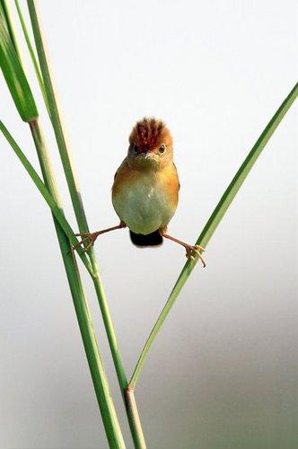 NINJA BIRD!