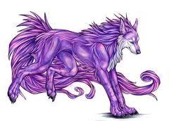 Purple بھیڑیا
