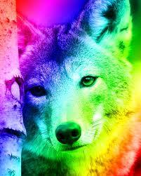 cầu vồng chó sói, sói