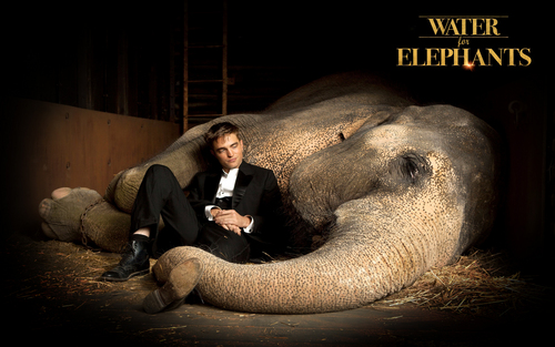 Water for Elephants fond d'écran