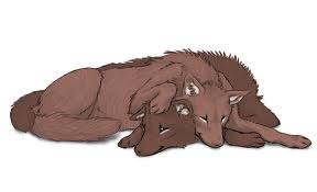 serigala cinta