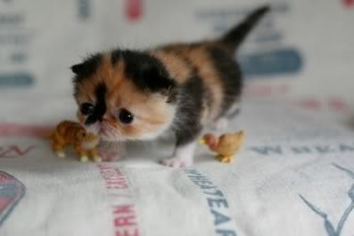 am i cute???