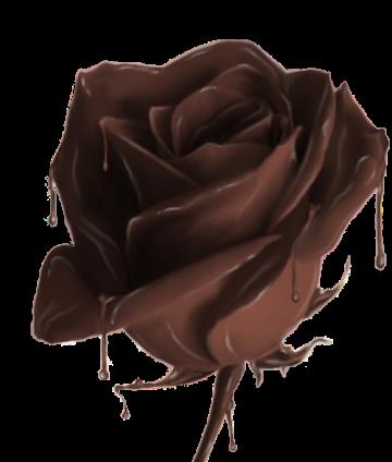 sweeet chocolate rose