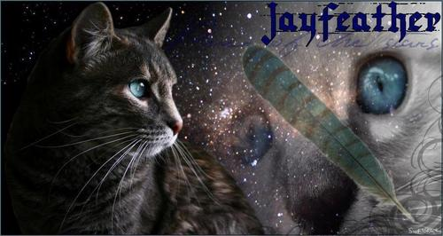 Warriors (Novel Series) پیپر وال probably containing a tom, a cat, and a tabby called Jayfeather