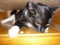 My fat cat :-D
