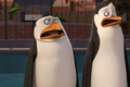 Uhh... - penguins-of-madagascar screencap