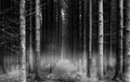 dark forest - after-dark photo