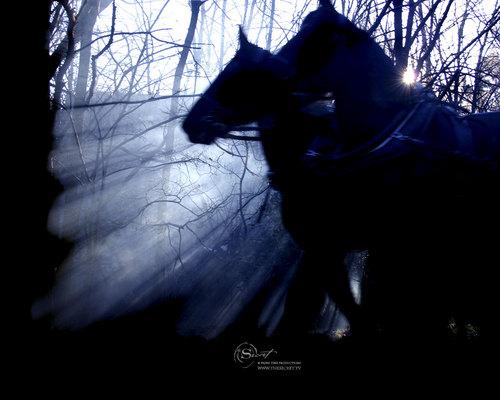 Pferde Hintergrund