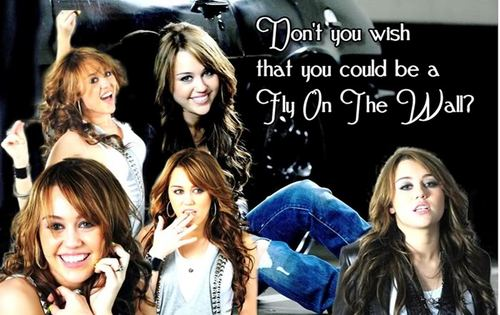 Disney Channel Stars wallpaper with a portrait called miley albums