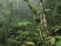 rainforest - mother-nature photo
