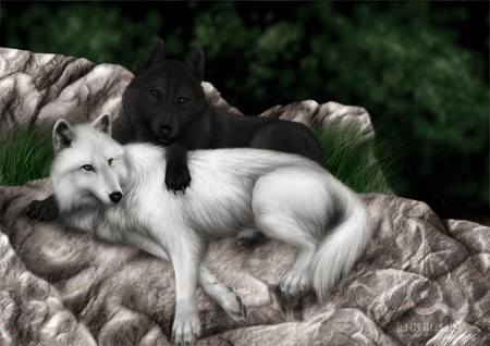 Alpha and Omega karatasi la kupamba ukuta titled Brandon (me) and Lilly. (As real wolves)