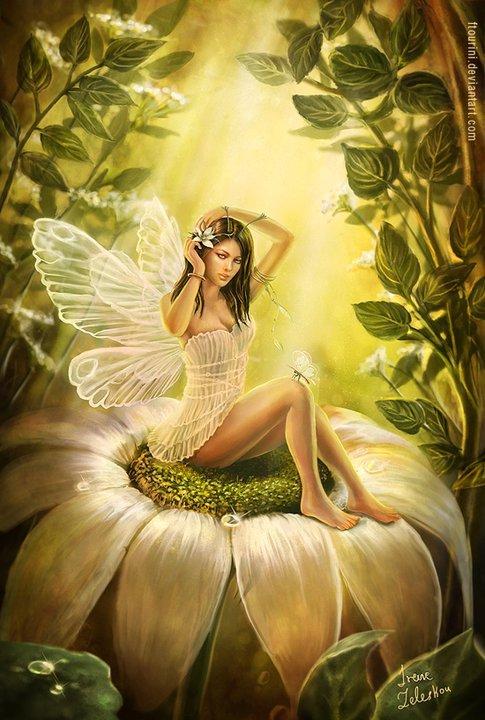 Fairies fairies photo 24898629 fanpop