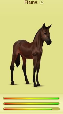 Flame - my berdarah murni, keturunan asli kuda jantan muda, colt anak kuda, foal