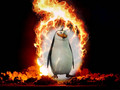 Kaboom - rico-the-penguin photo