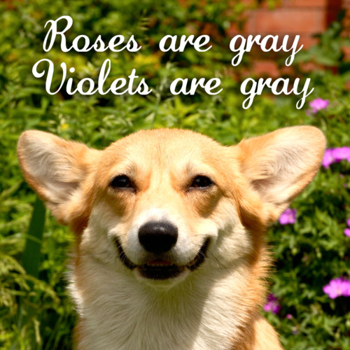 Poem For Dogs
