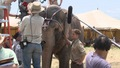 water for elephant-Rob