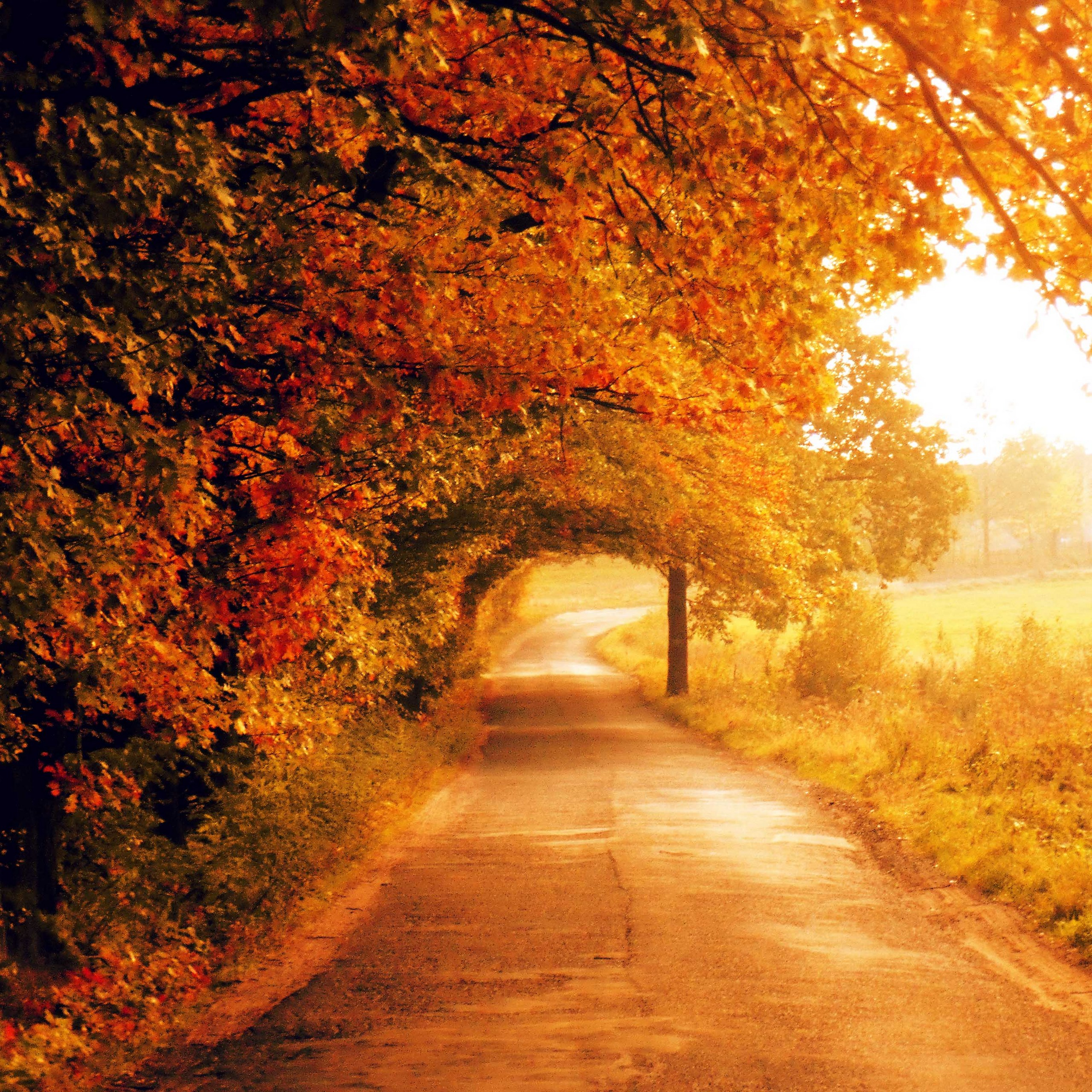 Autumn is the time for dreaming