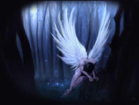 Beautiful angeli