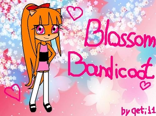 Blossom Bandicoot