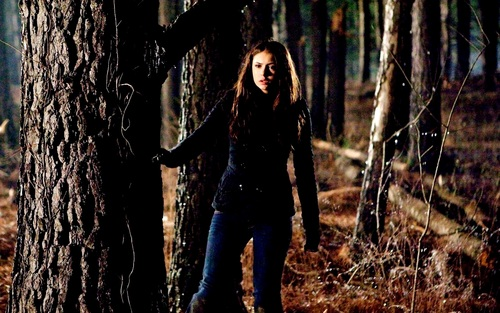 Katherine Pierce and Elena Gilbert wallpaper probably with an american white birch, a sitka spruce, and a beech entitled Elena&Katherine wallpaper