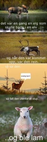 Norsk humor på sitt beste:)