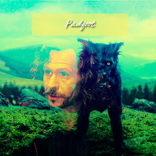 Padfoot <3