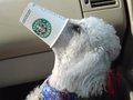 Perk up your Pet - starbucks photo