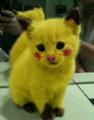 Pikacat (Pikachu cat)