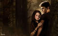 h/g love - harry-and-ginny wallpaper