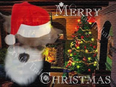 क्रिस्मस जानवर