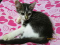 My Kitty At Home - cute-kittens photo