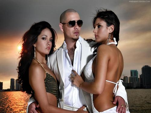 Music images Pitbull HD wallpaper and background photos