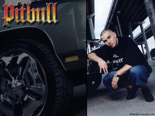 Pitbull वॉलपेपर