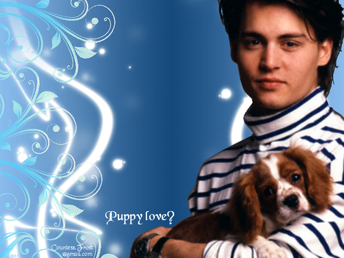 Johnny Depp Images Puppy Love? HD Wallpaper And Background