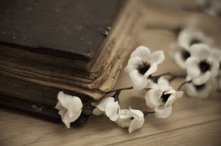 beautiful flores with book