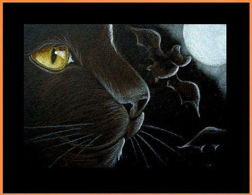 ღ Black Kitty