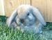 ▲Bunny▲ - bunny-rabbits icon