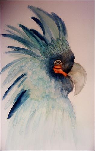 Blue bird (Parrot?)