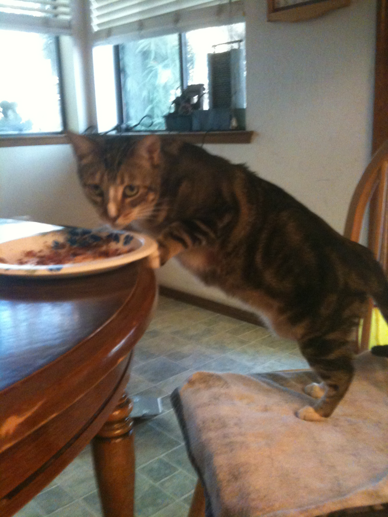 Strange Caught Eating Off The Table Cats Photo 25197624 Fanpop Interior Design Ideas Gentotthenellocom