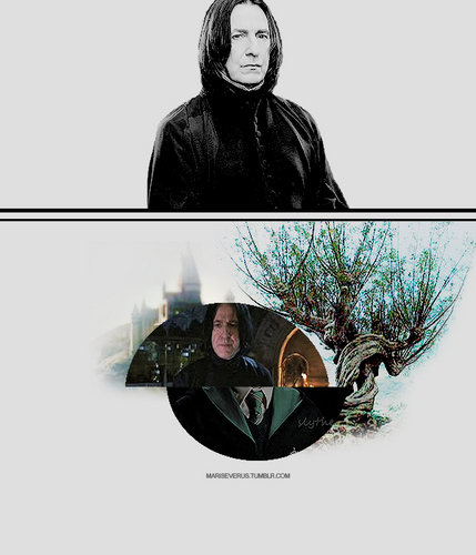 更多 of Severus Snape