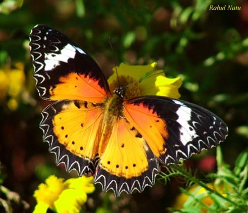 Most Beautiful Butterflies