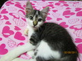 My kitten At home~ Minshi - cute-kittens photo