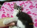 My kitten At home~ Minshi