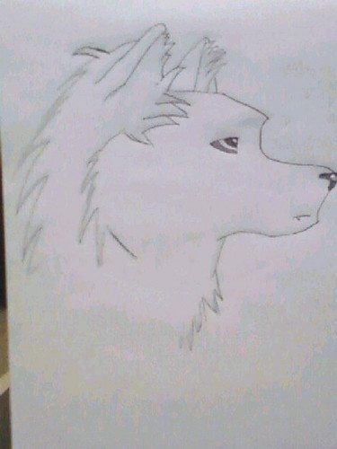 My serigala, wolf drawing