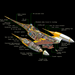 N-1 starfighter (Cutaway picture)