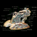Armored Assault Tank (AAT) (Cutaway picture)