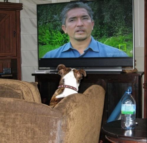Watch Dog Whisperer Cesar Millan Show